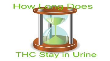 How Long Does Weed (THC) Stay in Your Urine?' – Important Data You Need to Know!!!
