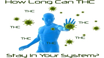 How Long Can THC Stay in Your System?- Get Ready for Your Drug Test!!