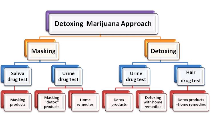 Detox Marijuana Approaches Diagram