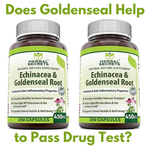 "You might not be familiar with it but goldenseal is one of the most popular herbs in the world. It has many medical benefits. Many readers ask me ""does Goldenseal help to a pass drug test?"" It's a valid question because goldenseal is easy to acquire and is known for its health benefits. I decided to do my research on the topic to help out my readers to the best of my abilities. You might have used goldenseal for another medical reason or you might have only heard of it because you have a drug test coming up. Either way, I'm going to start from scratch and help you get the answer you need. It can be stressful to get a job as a recreational drug user since many places still drug screen applicants and don't hire those that show up as positive for marijuana or other drugs. Being prepared for the drug test can be a game changer. What Is Goldenseal? Goldenseal is an herb/plant called Hydrastis Canadensis. This plant is native to certain parts of North America. It's been used for many years to treat various ailments. It's mostly popular for its anti-inflammatory effects and anti-bacterial properties. People use it as a cold or flu remedy, in addition to eye drops, or as a laxative. 1. Berberine (https://en.wikipedia.org/wiki/Berberine) is one of the compounds in goldenseal that's responsible for its ability to fight off a cold. Goldenseal can also be combined with Echinacea in creating over the counter cold and flu remedies. The full extent of the effects of goldenseal hasn't been thoroughly studied. If you have a cold, flu, or allergy, it's important to consult your doctor first to get a thorough assessment of your condition. 2. Goldenseal also acts as a laxative. If you take goldenseal, you will most likely visit the bathroom more often. The laxative effect is why many people think goldenseal would be effective as a detoxing agent or in helping people pass a drug test. 3. The side effects of goldenseal are rare and very minor. It's relatively harmless. Some people experience nausea, GI disturbances, or might have reduced liver activity. These effects usually occur with prolonged and heavy use of goldenseal. If you only use goldenseal for a short time, it's highly unlikely that you experience any of them. 4. The fact that goldenseal can inhibit some liver enzymes is worrisome if you're trying to pass a drug test. The liver is responsible for getting rid of many of the toxins and chemicals in the body. If the liver is inhibited, these toxins will accumulate. Does Goldenseal Have Cleansing Properties? Goldenseal doesn't seem to have any cleansing properties. It's an herb that is great at fighting inflammation and combating bacteria but has limited effects otherwise. It's good for you but it's not going to help you get rid of anything. Before using goldenseal for a cold or any other reason, you should talk to your doctor first to make sure it's safe and has no harmful effects. How Goldenseal Can Help Detoxify Your Body? Goldenseal has no detoxifying effects on your body. It won't speed up the elimination of toxins and drugs. On the contrary, since it can inhibit enzymes in the liver, some scientists think it could have the opposite effect. Liver enzymes are the ones that detoxify the body and get rid of drugs or other chemicals. These enzymes can be stimulated to work at an increased rate or inhibited to work at a lower rate. Goldenseal appears to inhibit them. This can be harmful and will lead to the accumulating a drug test. If you have enough time until your test, you can cleanse your body naturally through exercising and healthy diet. And if you need to significantly speed up your body detoxing process; you might consider using a whole body detox program like Toxin Rid. So, if you are a light/moderate user, a 2-3 days detox program should be able to help you to drop your THC levels below cutoff levels. But if you are a regular marijuana user (more than 2-3 times a week), I usually recommend completing at least a 10 day detox program as the best option. I have seen that many heavy users were able to detox their bodies before their drug test day. Some users prefer on the day of their test to use a popular detox drink like Mega Clean or QCarbo32. Just remember that such drinks are most effective for light or moderate users, but not for heavy ones. Please check available detox marijuana products here: • How to choose Detox Marijuana Products for a • How to choose Detox Marijuana Products for a Thank you for reading our ""Does Goldenseal Help to Pass Drug Test in 2020?"" We would love to hear about your experience with using goldenseal in order to pass your urine drug test. Please live comment below and I believe others in the same situation will definitely appreciate and benefit from it Helpful links: https://detoxmarijuanafast.com/5-day-detox-toxin-rid-review https://detoxmarijuanafast.com/10-day-detox-toxin-rid-review ""How Long Does Weed (THC) Stay in Your Urine? - Important Data You Need to Know!!!"" ""Fact or Fiction – You Can Beat a Drug Test with Home Remedies?"" Learn more here: https://www.webmd.com/vitamins/ai/ingredientmono-943/goldenseal https://www.healthline.com/health/goldenseal-cure-for-everything"